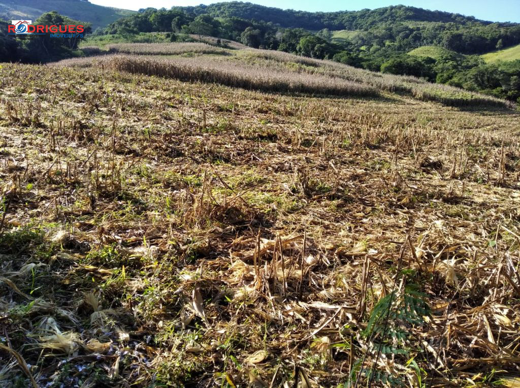 Rural à venda, Linha Santa Catarina, PALMA SOLA - SC